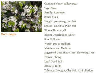MBG Tree Finder.png